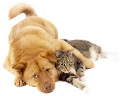 dog & kitty
