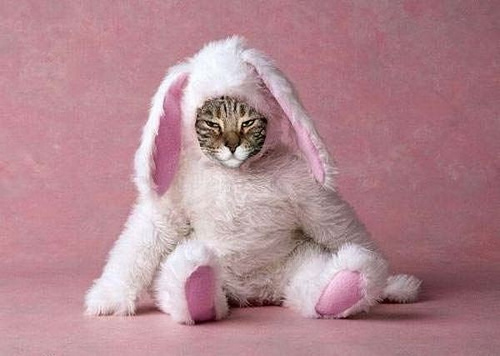 sad kitty in bunny suit