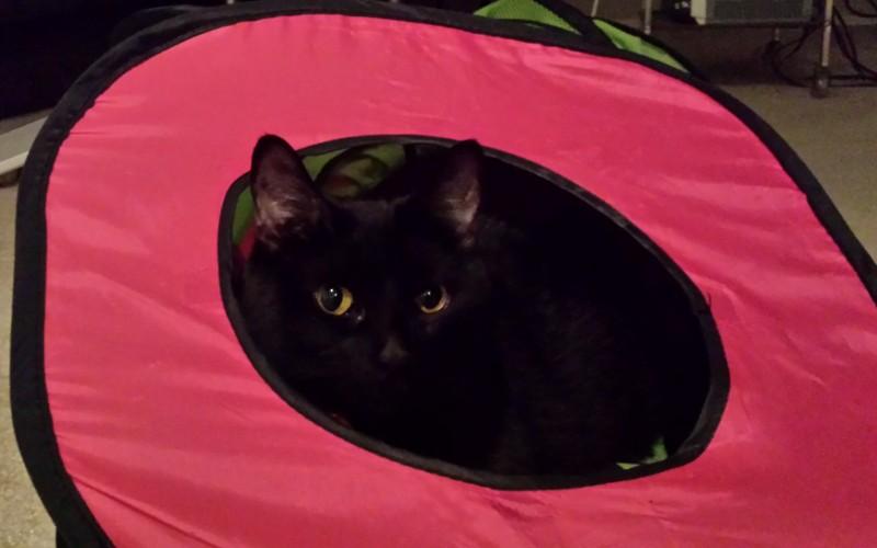 My cat Jiji